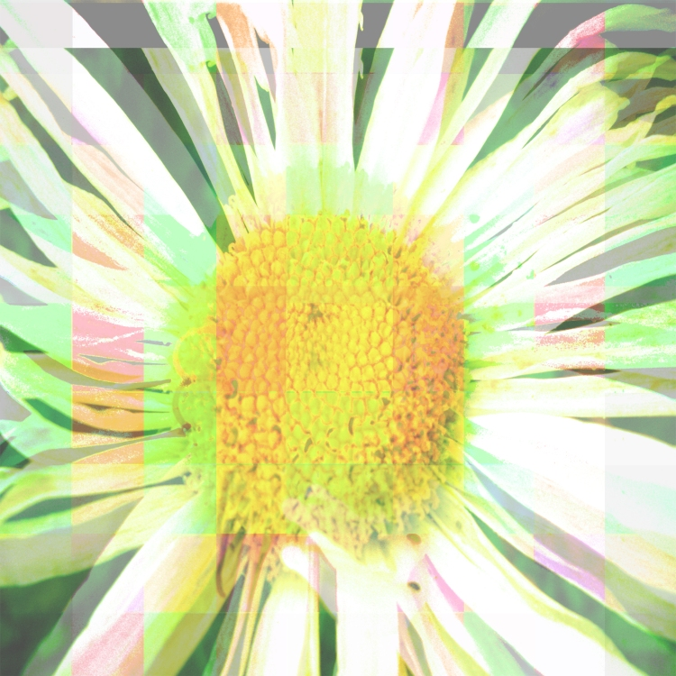 Tripping Daisy, 2010 Digital Photograph Collage